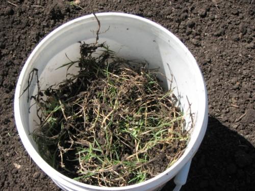 Bucket of Weeds