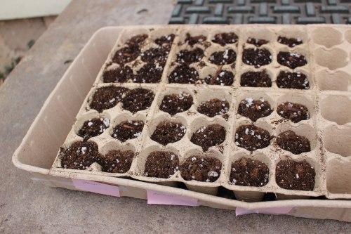 Seed-Starting-Flat