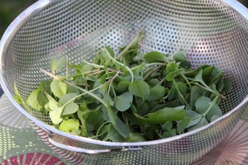 First-Salad