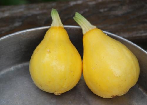 Lemon Squash 2.jpg